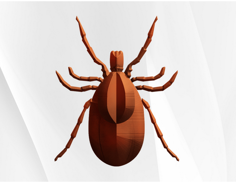 lyme-disease-a-nationwide-concern
