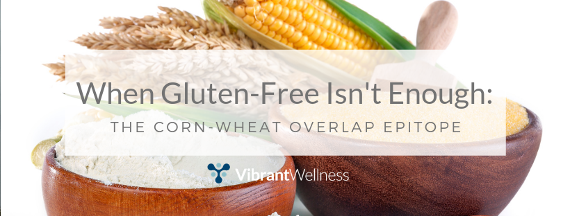 when-gluten-free-isnt-enough-the-corn-wheat-overlap-epitope